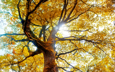 autumn-slider
